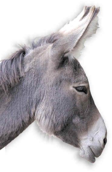 eseln paarungs bild