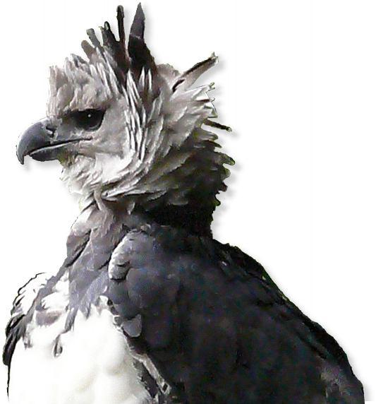 Bilder von nackten blonden Verbreitung Adler